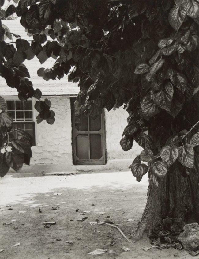 Dorothea Lange. 'Mulberry Tree, Neagle Home, Toquerville, Utah' 1953