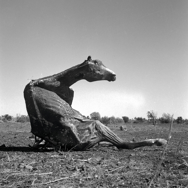 Sidney Nolan (Australian, 1917-1992) 'Untitled (desiccated horse carcass sitting up)' 1952