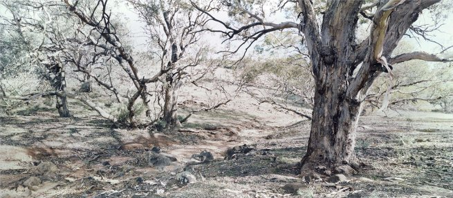 Rosemary Laing. 'After Heysen' 2005