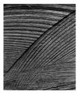 Marcus Bunyan. 'Untitled (bandsaw)' 1994