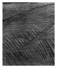 Marcus Bunyan. 'Untitled (comet)' 1994