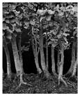 Marcus Bunyan. 'Growth 2' 1994