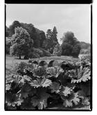 Marcus Bunyan. 'Landscape, Chatsworth House' 1993