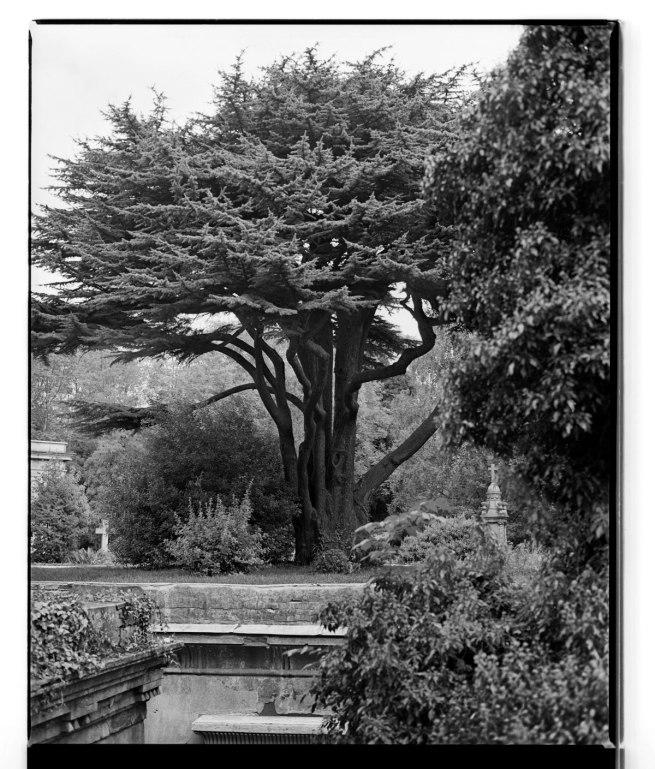 Marcus Bunyan. 'Tree, Highgate Cemetery' 1993