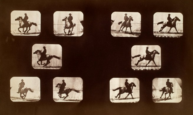 Eadweard Muybridge. Studies of Foreshortenings. Horses. Running. Mahomet. Plates 143-144, 1879, from 'The Attitudes of Animals in Motion' 1881