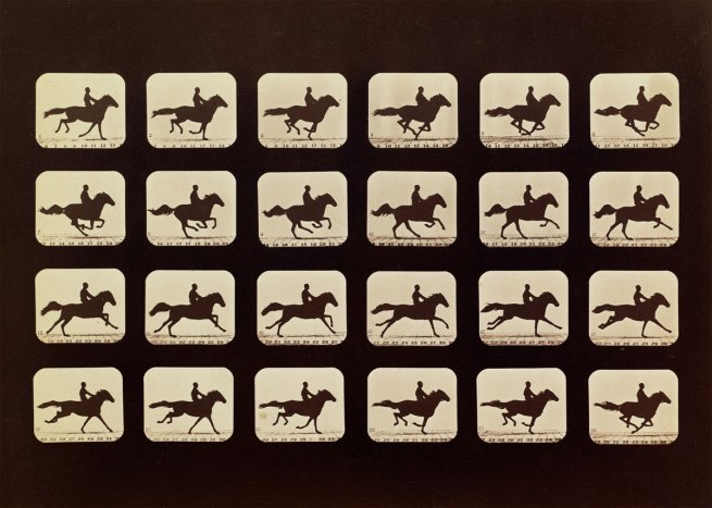Eadweard Muybridge. Horses. Running. Phryne L. Plate 40, 1879, from 'The Attitudes of Animals in Motion' 1881