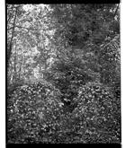 Marcus Bunyan. 'Two graves' 1993