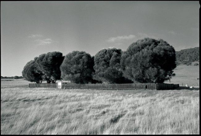 Ricky Maynard. 'The Healing Garden, Wybalenna, Flinders Island, Tasmania' from 'Portrait of a Distant Land' 2005