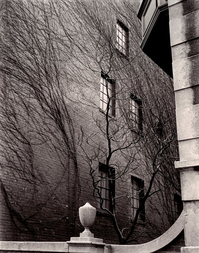 Brett Weston (American, 1911-1993) 'Building, Ivy, Tree, Sutton Place, New York' 1945