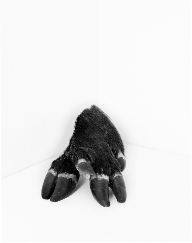 Tereza Zelenkova. 'Cadaver' 2011
