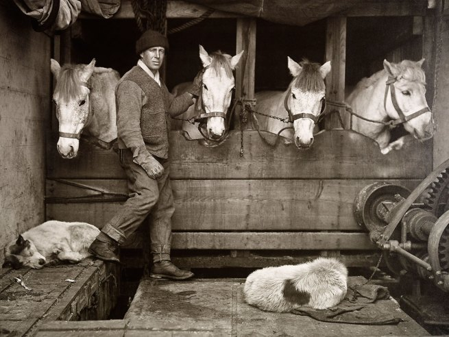 Herbert Ponting. 'Captain Lawrence Oates and Siberian ponies on board 'Terra Nova'' 1910