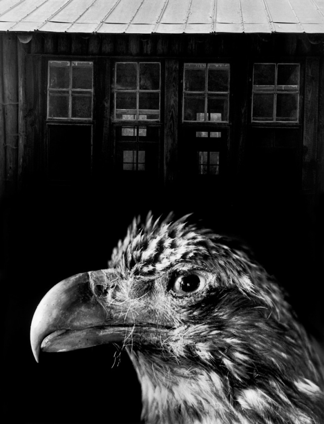 Jerry Uelsmann (born 1934) 'Bless Our Home and Eagle' 1962