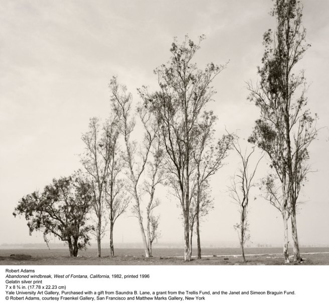 Robert Adams. 'Abandoned windbreak, West of Fontana, California' 1982