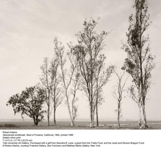 Robert Adams. 'Abandoned windbreak, West of Fontana, California' 1982