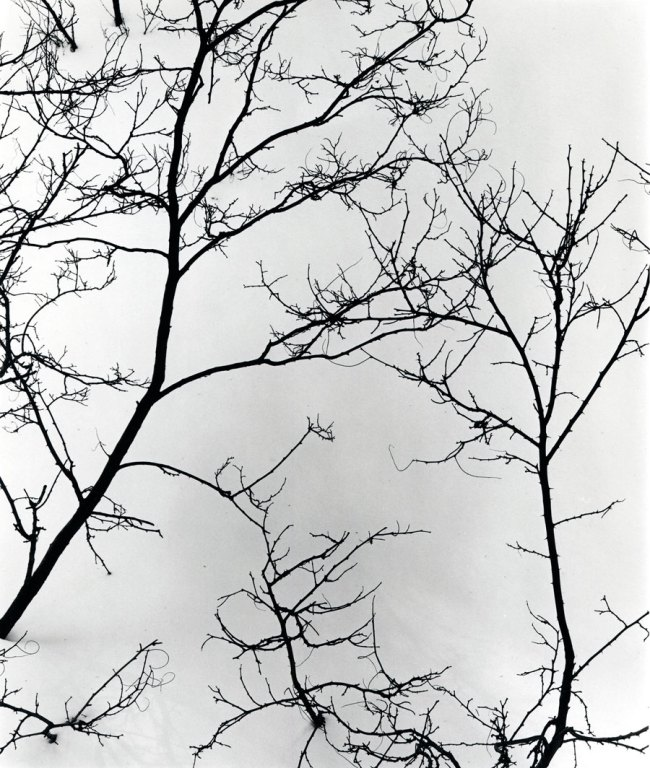 Brett Weston. '(Untitled) Branches and Snow' c. 1975