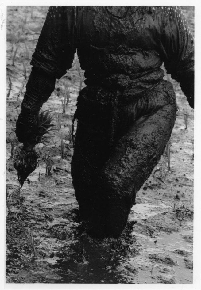 Keisuke Katano. 'Woman planting rice' 1955