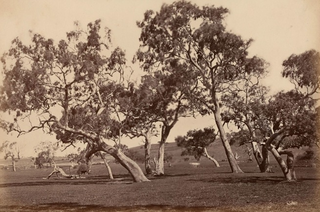 Fred Kruger. 'Bush scene near Highton' c. 1879