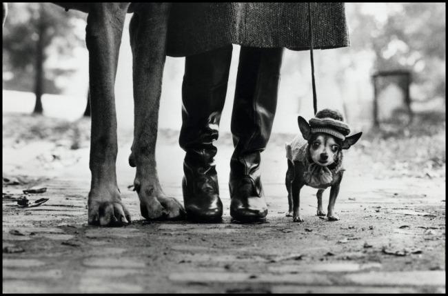 Elliott Erwitt. 'USA. New York. 1974. Felix, Gladys and Rover' 1974