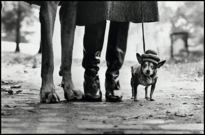 Elliott Erwitt. 'USA. New York. 1974. Felix, Gladys and Rover' 1974