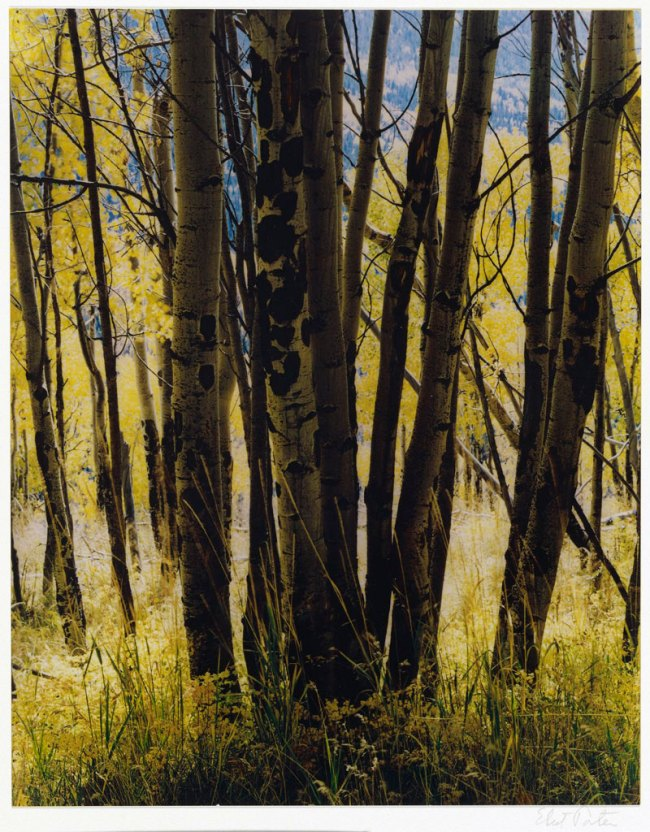 Eliot Porter (American, 1901-1990) 'Aspens and Grass, Elk Mountain Road, New Mexico, October 3, 1972' 1972