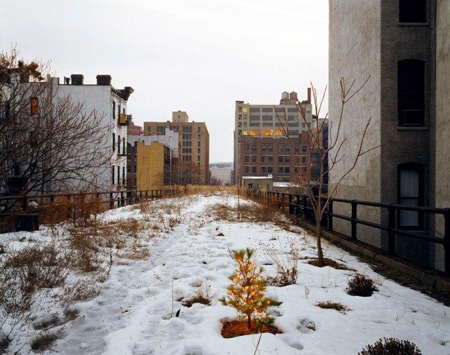 Joel Sternfeld. 'Ken Robson's Christmas Tree, January 2001' 2001