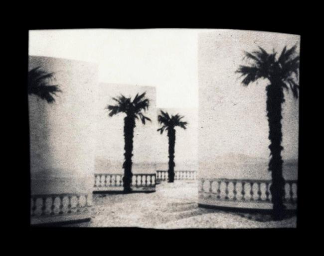 Ruth Thorne-Thomsen. 'Paper Palms California' 1981