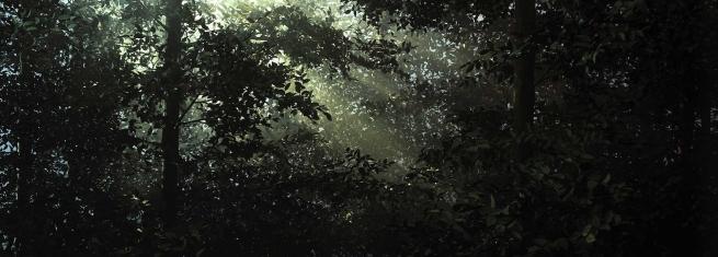 Thomas Demand (German, b. 1964) 'Lichtung' / 'Clearing' 2003