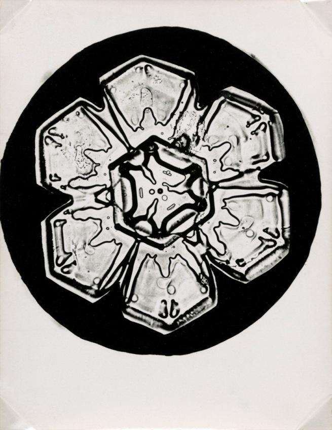 Wilson Alwyn Bentley (American, 1865-1931). 'Snowflakes' c. 1905 (detail)