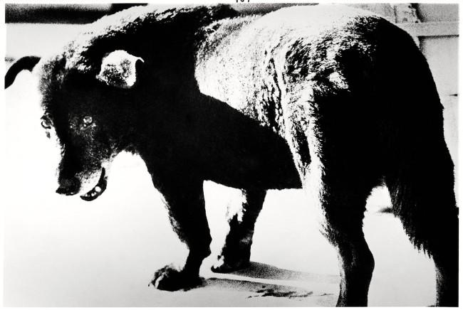 Daido Moriyama. 'Misawa' 1971
