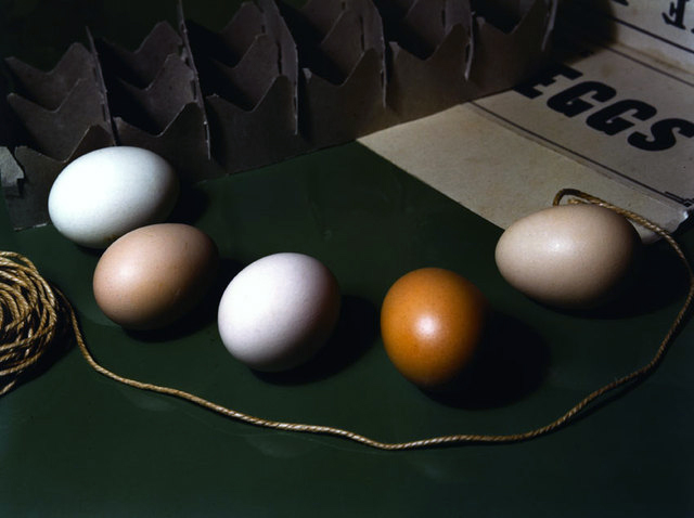 Imogen Cunningham. 'Five Eggs' 1951
