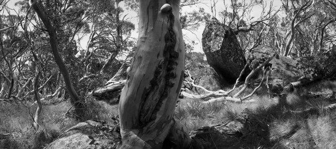 Ingeborg Tyssen. 'Perisher Valley, NSW' from the series 'From the heart of the forest to the edge of the road' series 1984