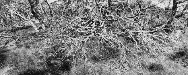 Ingeborg Tyssen. 'Perisher Valley No 6, NSW' 1984