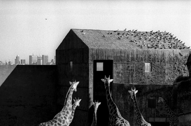 Ingeborg TYSSEN. 'Taronga Zoo, Sydney' 1974