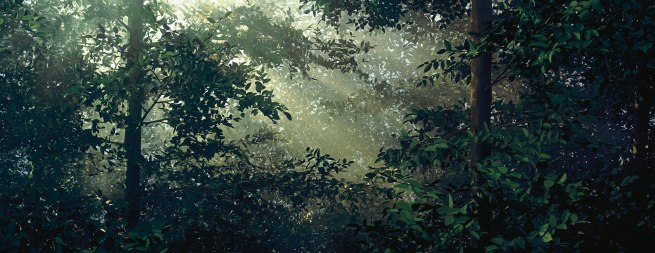 Thomas Demand German 1964- 'Lichtung / Clearing' 2003