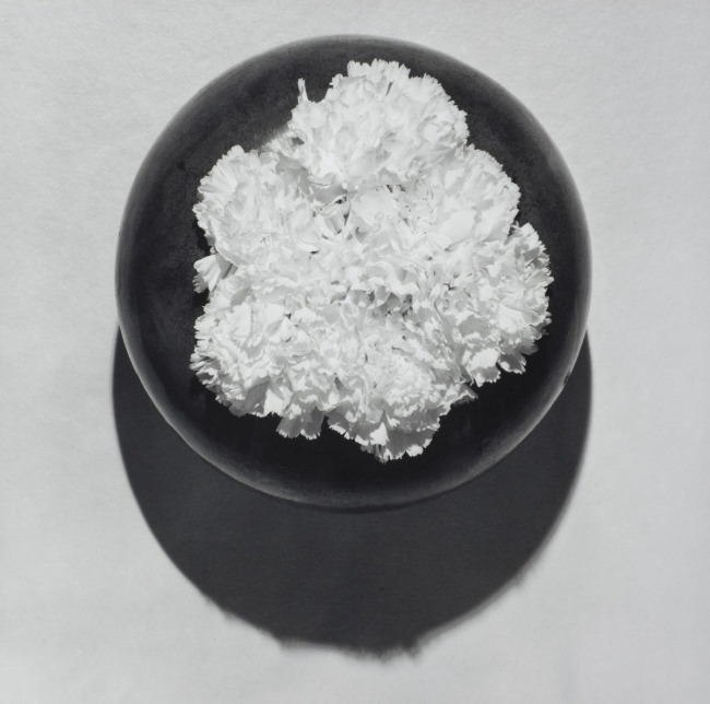 Robert Mapplethorpe. 'Carnation, N.Y.C. (Y Portfolio)' 1978