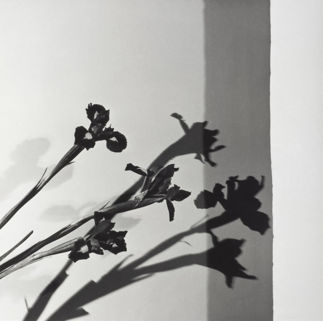 Robert Mapplethorpe. 'Irises, N.Y.C. (Y Portfolio)' 1977