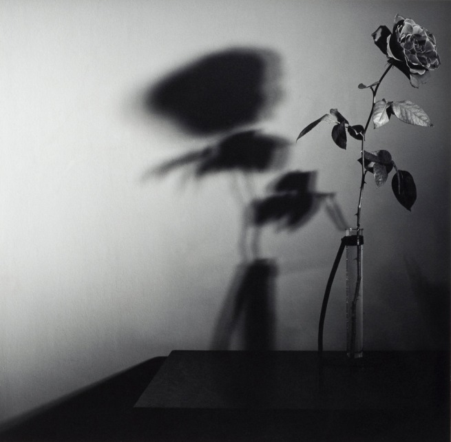 Robert Mapplethorpe. 'Rose, N.Y.C. (Y Portfolio)' 1977