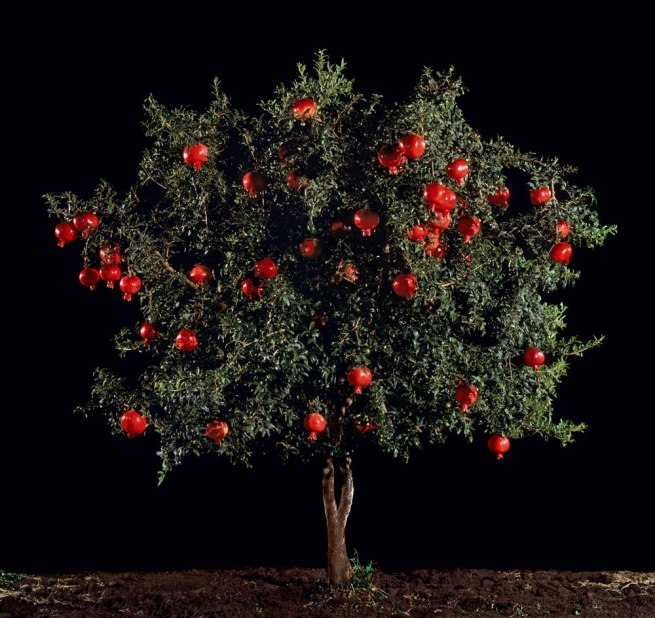 Tal Shochat. 'Pomegranate (Rimon)' 2010