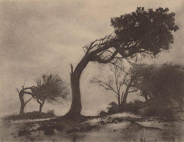 Harold Cazneaux. 'The bent tree, Narrabeen' 1914
