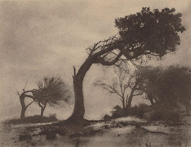 Harold Cazneaux. 'The bent tree, Narrabeen' 1914