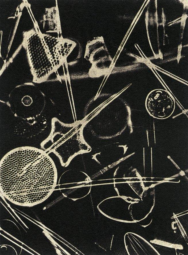 Laure Albin Guillot. 'Micrographie' 1929