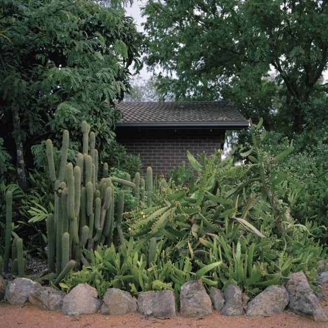 Lee Grant(Australian, b. 1973) 'Cactus Garden' 2012