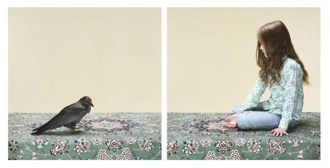 Petrina Hicks. 'The Hand That Feeds' 2013