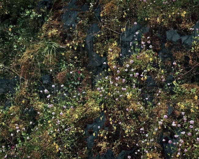 Johsel Namkung. 'Cougar Lake, Oregon June 1991' 1991