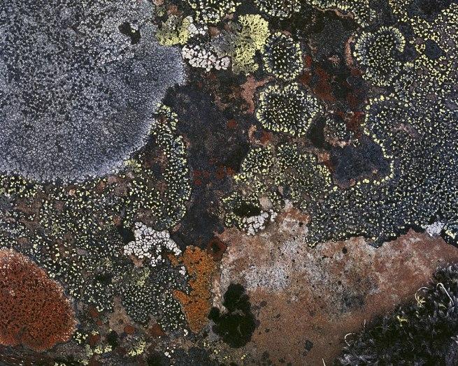 Johsel Namkung. 'Alaska Lichens, Date Unknown' Nd