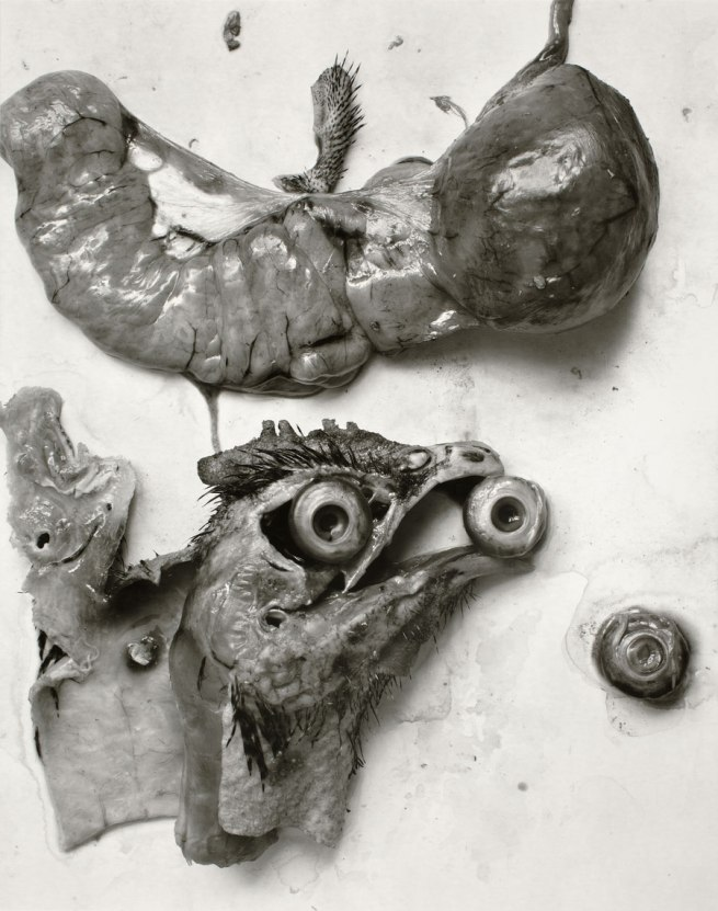 Frederick Sommer. 'The Anatomy of a Chicken' 1939