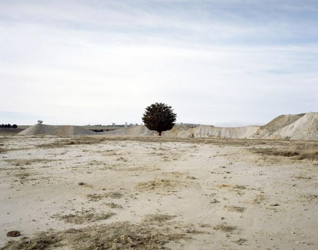 Jessie Boylan. 'Clunes (Tree)' 2013