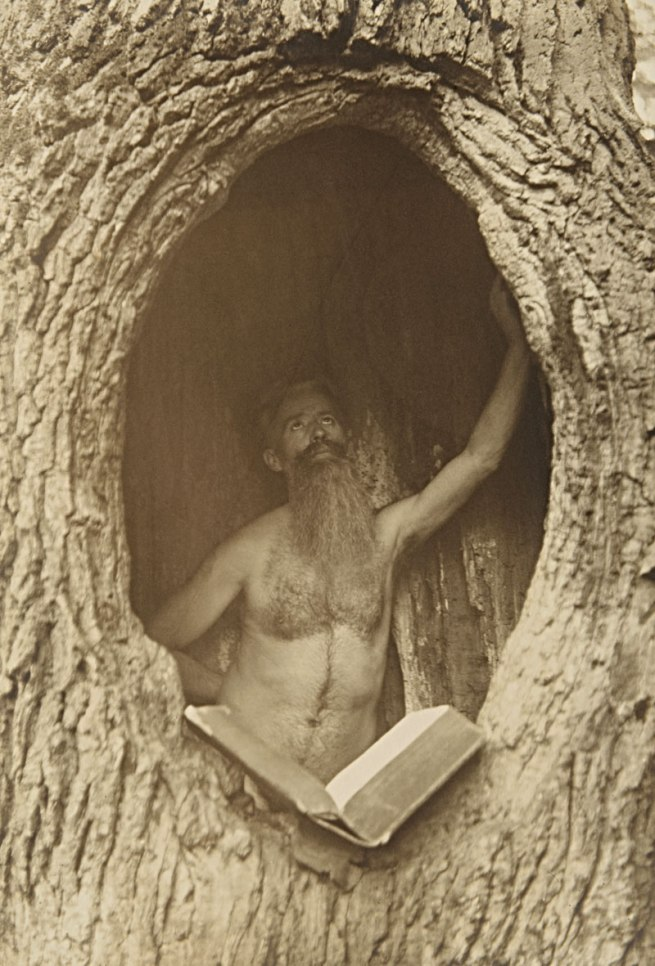 Photographer unknown (Max Lorenz Nielsen?). 'Male Nude in Tree' c. 1900