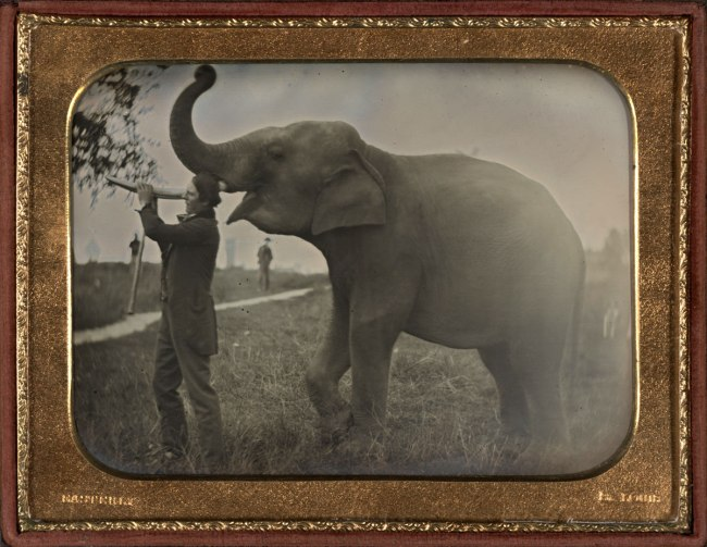 Thomas Easterly (American, 1809-1882) 'Man with Elephant' c. 1850