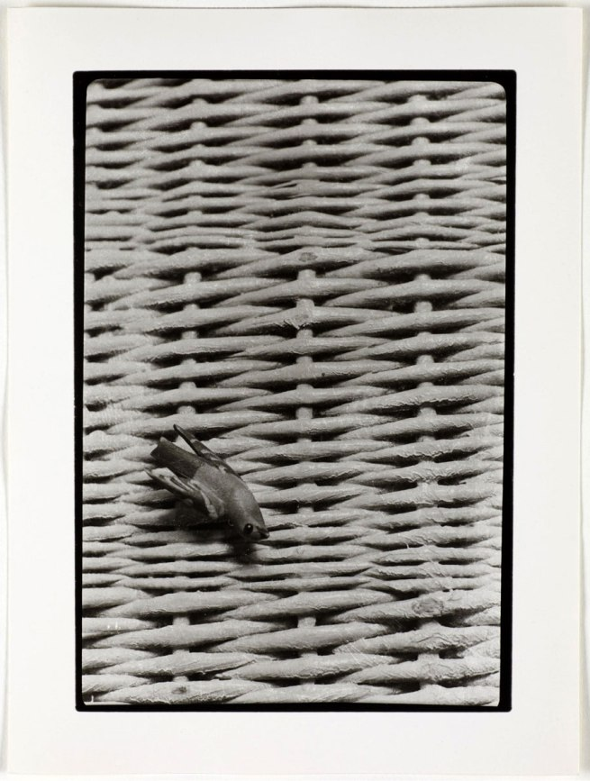 Otto Wols (Alfred Otto Wolfgang Schulze) 'Untitled (Still life - wicker and birds)' 1938 - August, 1939
